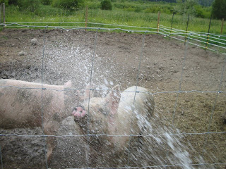 pigs+with+hose+july+1+08 Life Lessons From a Pig