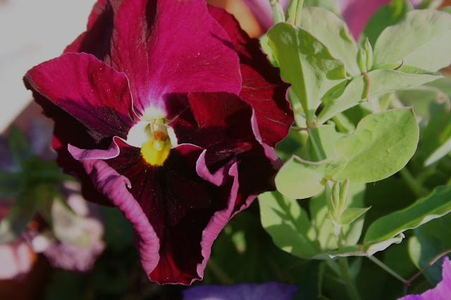 Indian Spring Flower Menu