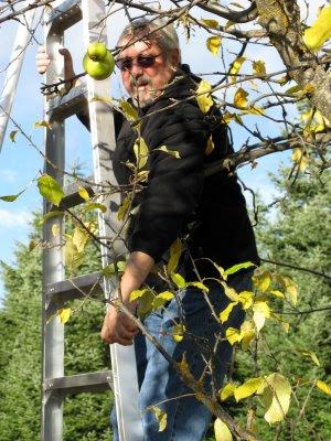 Dad picking apples