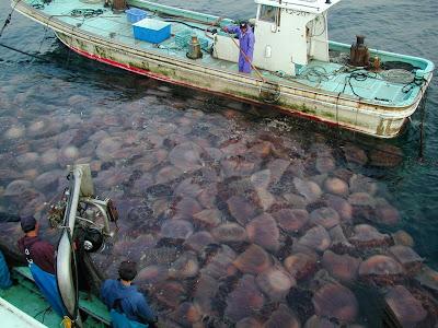 Nomura_Giant_jellyfish_Invasion_japan