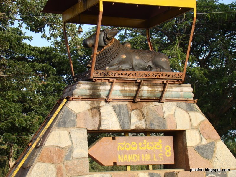 Nandhi Hills (Nandi Betta) - Lord Nandhi here is growing day by day.