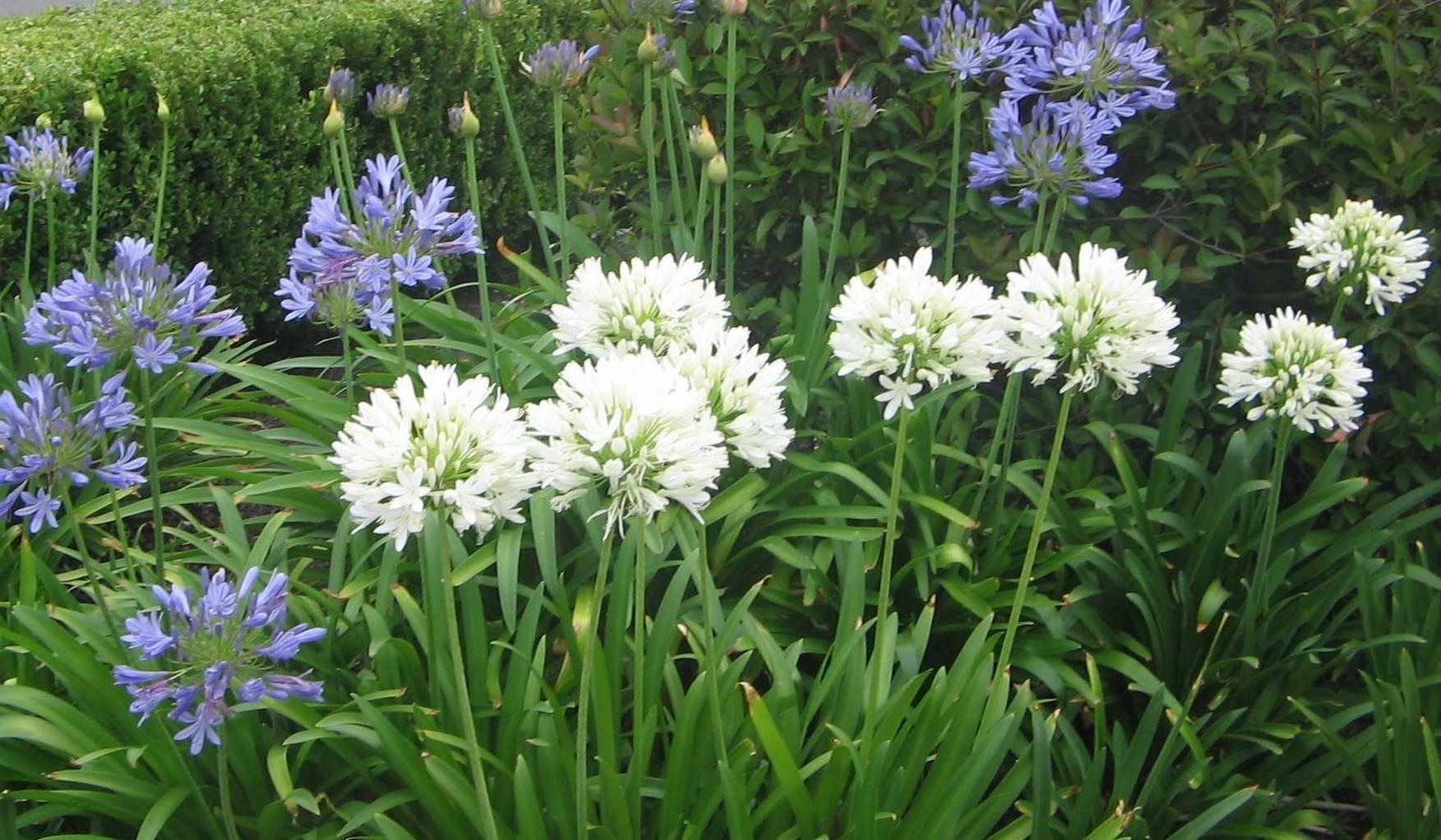 Seara Plantas & Flores Plantas de Jardim