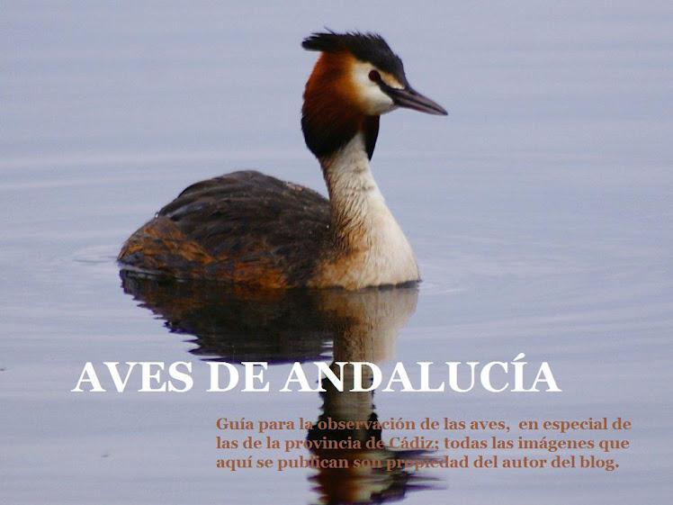 AVES DE ANDALUCÍA