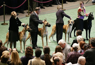 Westminster Kennel Club Dog Show