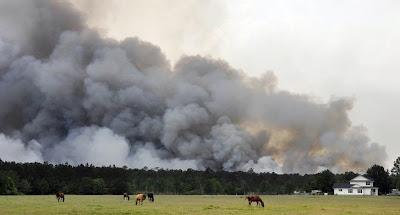 USA forest fire