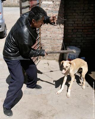Dog market in China
