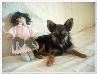 Mi pequeña perrita Malla, la alegria de la casa