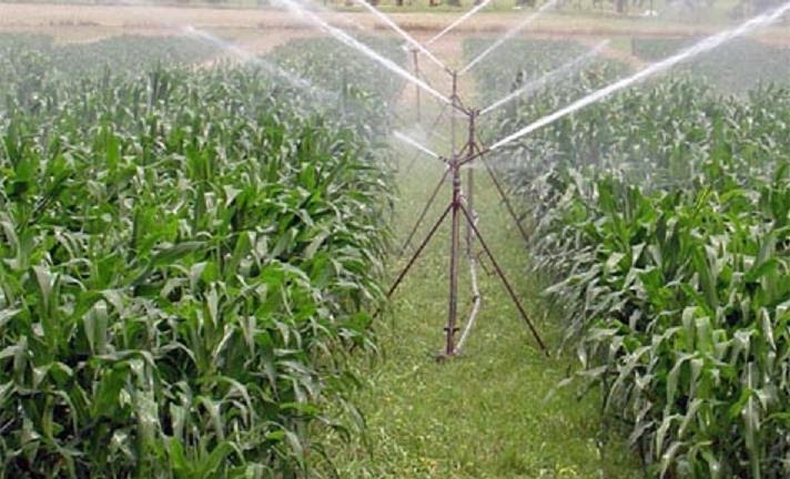 producci n agr cola 3 producc n de plantas ornamentales