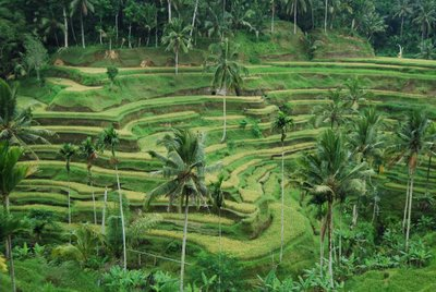 Tegalalang rice terrace bali tour to heaven for Tegalalang rice terrace ubud