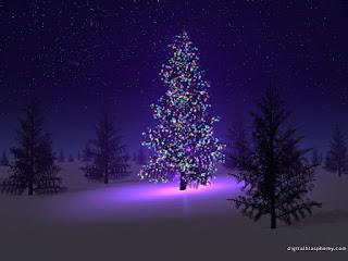 Christmas trees, Christmas tree,