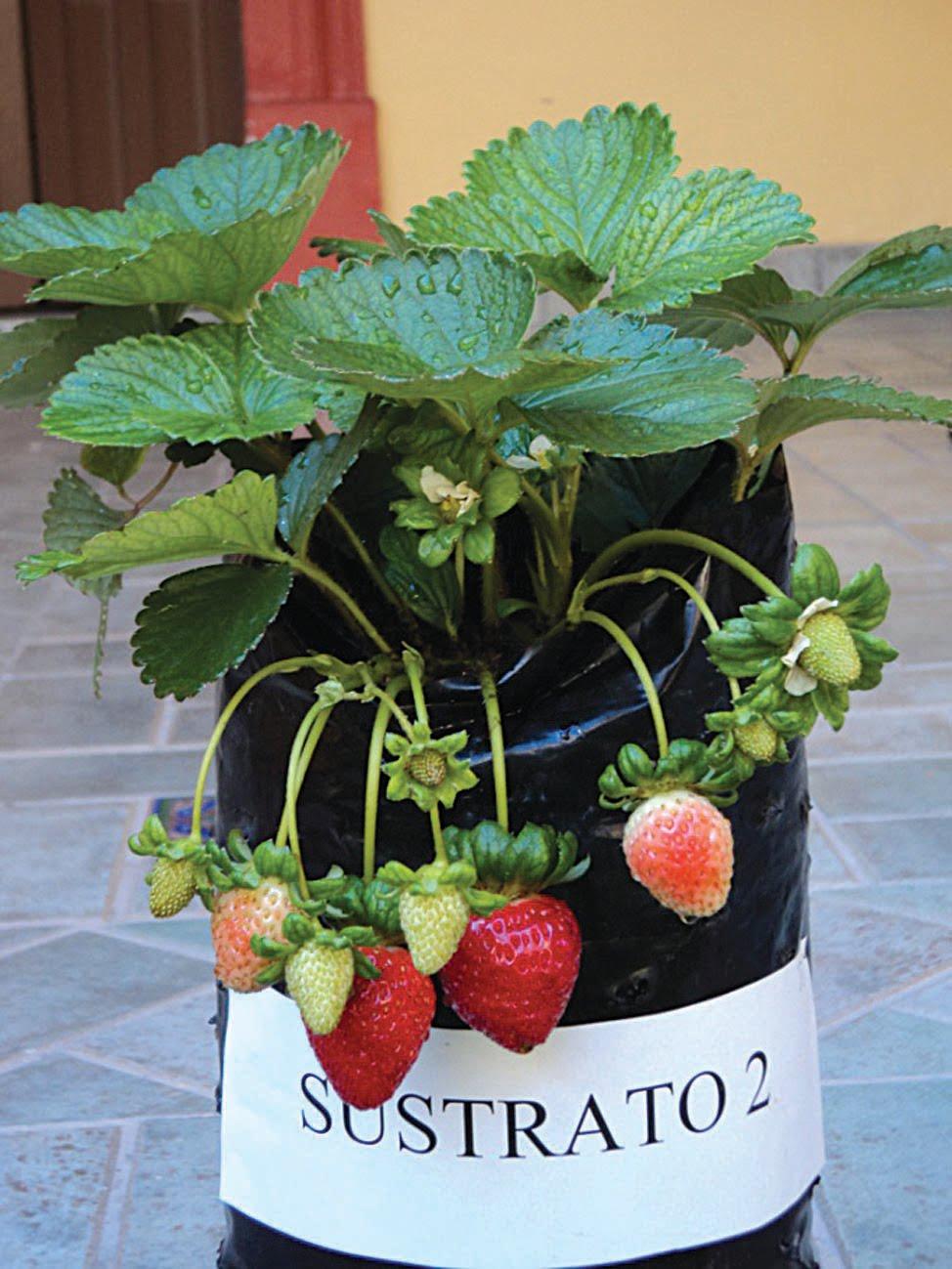 el proyecto con el que se inici la lnea de se refiere a la produccin orgnica de hortalizas primero a nivel invernadero