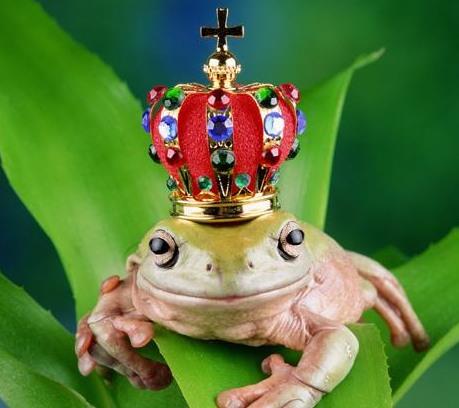 Al BAR del Regno Principe-ranocchio