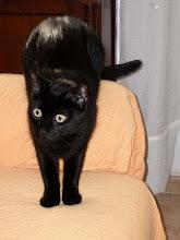 La mia gatta Maya