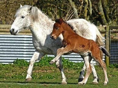 Cute Baby Animals Photo Pony