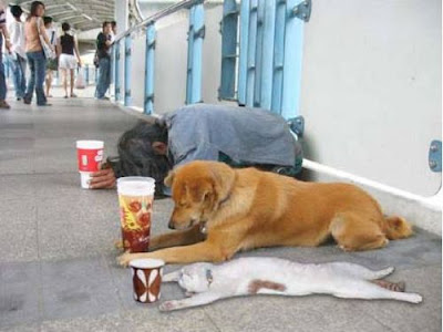 Funny Animals Gone Beggar