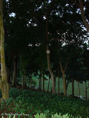 Bukit Gombak Trail Picture