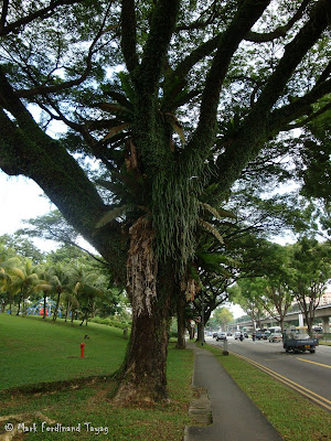 Yishun Town Garden Photo 4