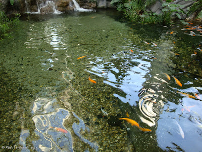Yakult Rainforest Discovery Pond Photo 2