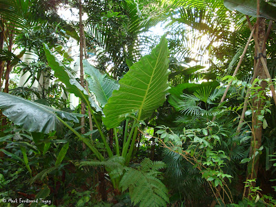 Yakult Rainforest Discovery Photo 11