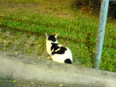 Singapore Cats Photo 3