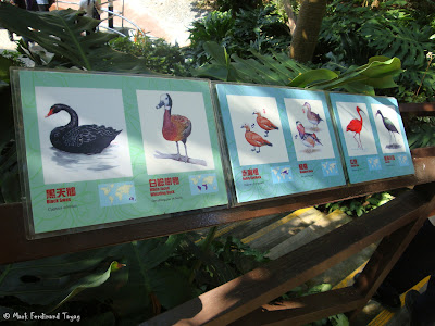Ocean Park Hong Kong Aviary Photo 11