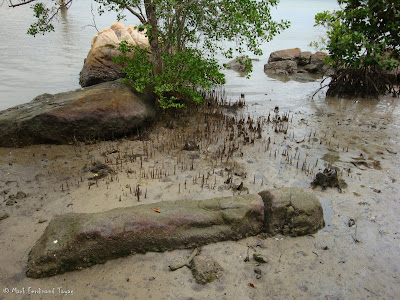 Pulau Ubin Singapore Batch 4 Photo 9