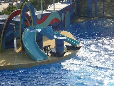 Ocean Park Live Dolphin Show Photo 7