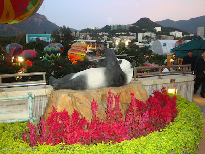 Giant Panda Habitat Ocean Park Hong Kong Photo 10