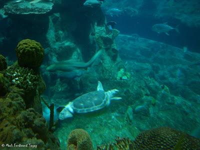 Atoll Reef Ocean Park Hong Kong Photo 12