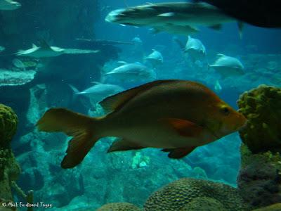 Atoll Reef Ocean Park Hong Kong Photo 13