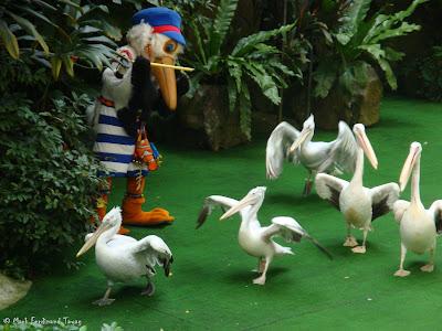 Jurong Bird Park - Birds n Buddies Show Photo 10
