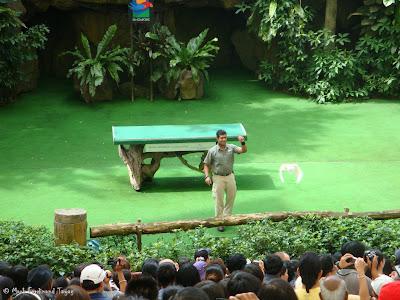 Jurong Bird Park - Birds n Buddies Show Photo 4