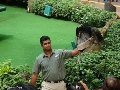 Jurong Bird Park - Birds n Buddies Show Photo 9