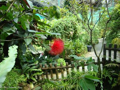 Butterfly Park, Kuala Lumpur Photo 12