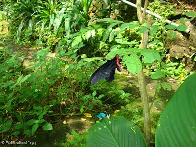 Butterfly Park, Kuala Lumpur Batch 2 Photo 6