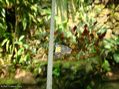 Butterfly Park, Kuala Lumpur Batch 2 Photo 8
