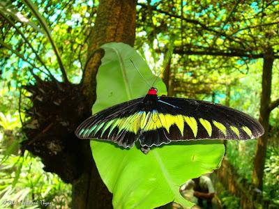 Butterfly Park, Kuala Lumpur Batch 2 Photo 9