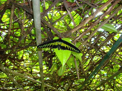 Butterfly Park, Kuala Lumpur Batch 2 Photo 15