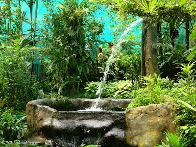 Butterfly Park, Kuala Lumpur Batch 3 Photo 7
