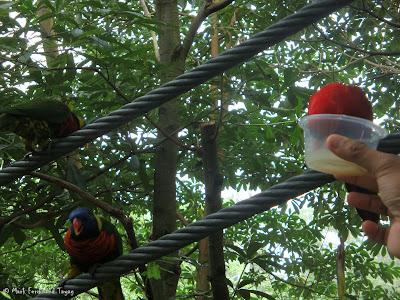 Jurong Bird Park - Lory Loft Photo 8