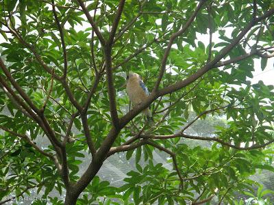 Jurong Bird Park - Lory Loft Photo 5