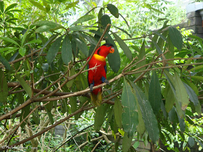 Jurong Bird Park - Lory Loft Photo 2