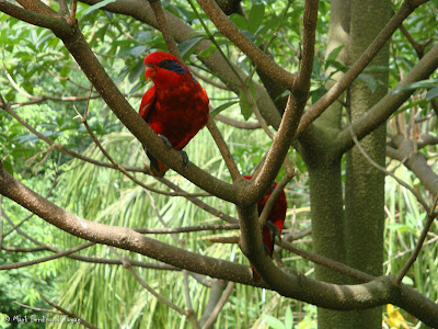 Jurong Bird Park - Lory Loft Photo 4