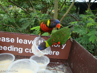 Jurong Bird Park - Lory Loft Batch 2 Photo 7