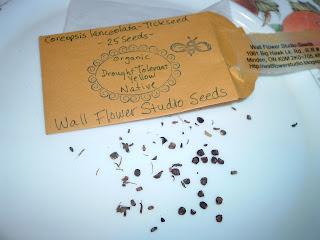 p[Photo: Coreopsis lanceolata seeds]
