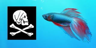 Microsoft Take Steps Against Pirated Windows 7- Antipiracy Update Released