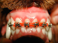 ortodontia canina