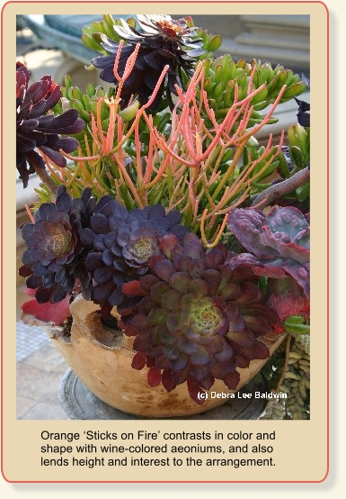 A year in the park again december 2010 - Succulent container gardens debra lee baldwin ...
