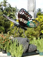 Photo of Solar Butterfly by Rein Triefeldt Who Visits Planet Havana Fri., March 13 for We Are BOOST