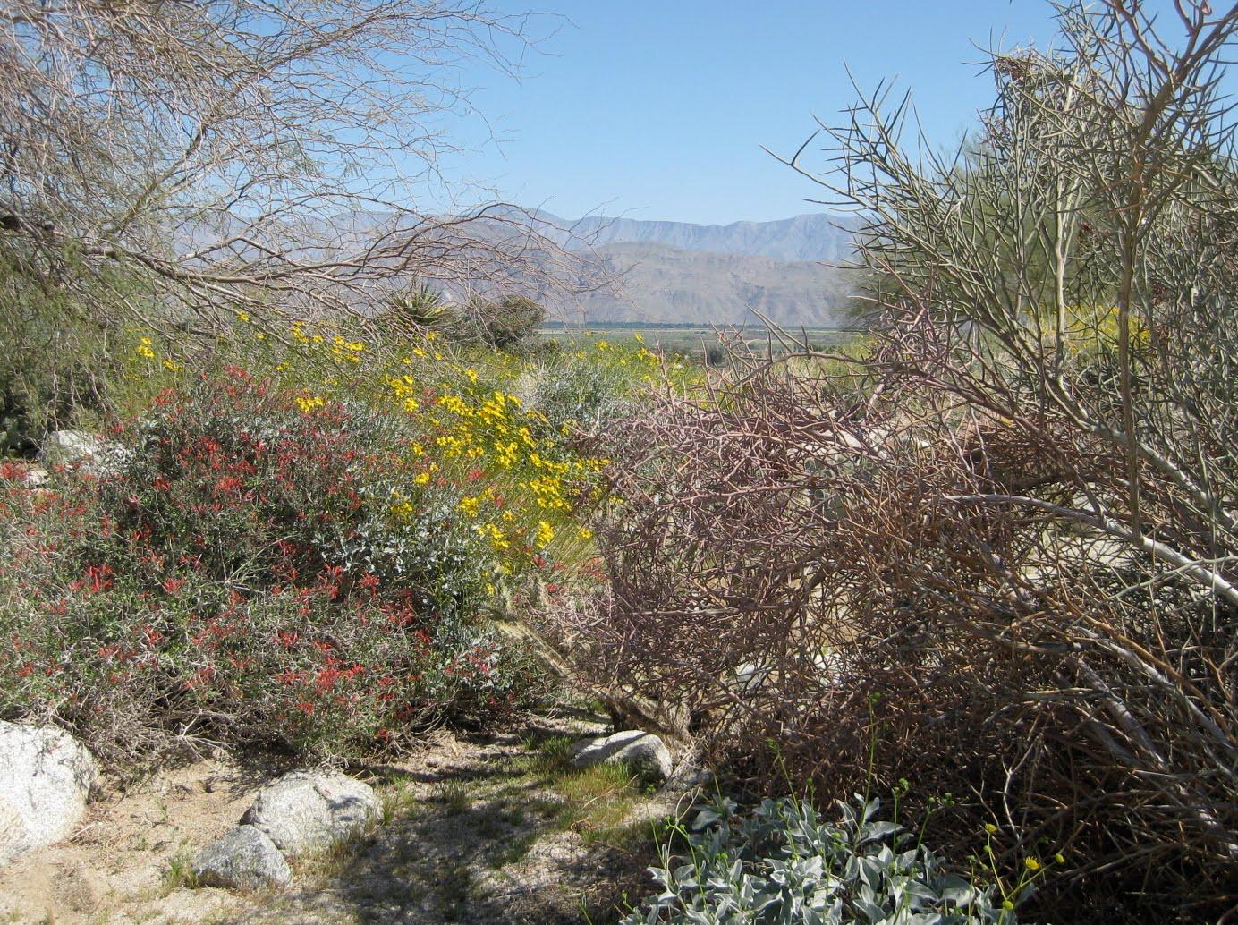 Borrego Ranch Resort And Spa